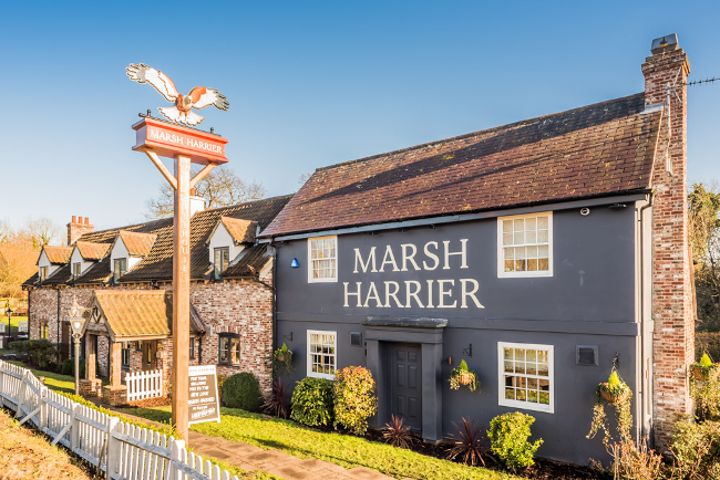 The Marsh Harrier in Norwich
